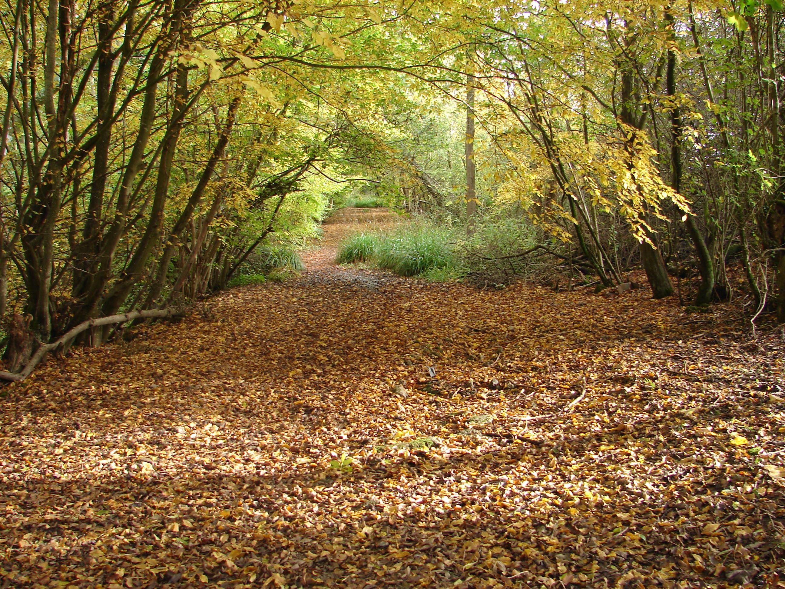 Photo of Hempstead Lane in Autumn