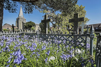 Photo of Bluebells at Holy Cross Church