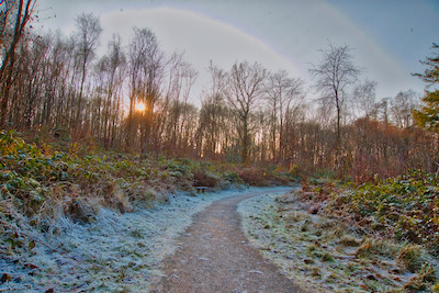 Photo of a path through the woods on a frosty morning
