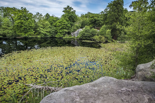 Photo of the lake in Lake Wood, Uckfield