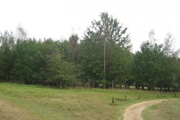 Photo of part of Millennium Green