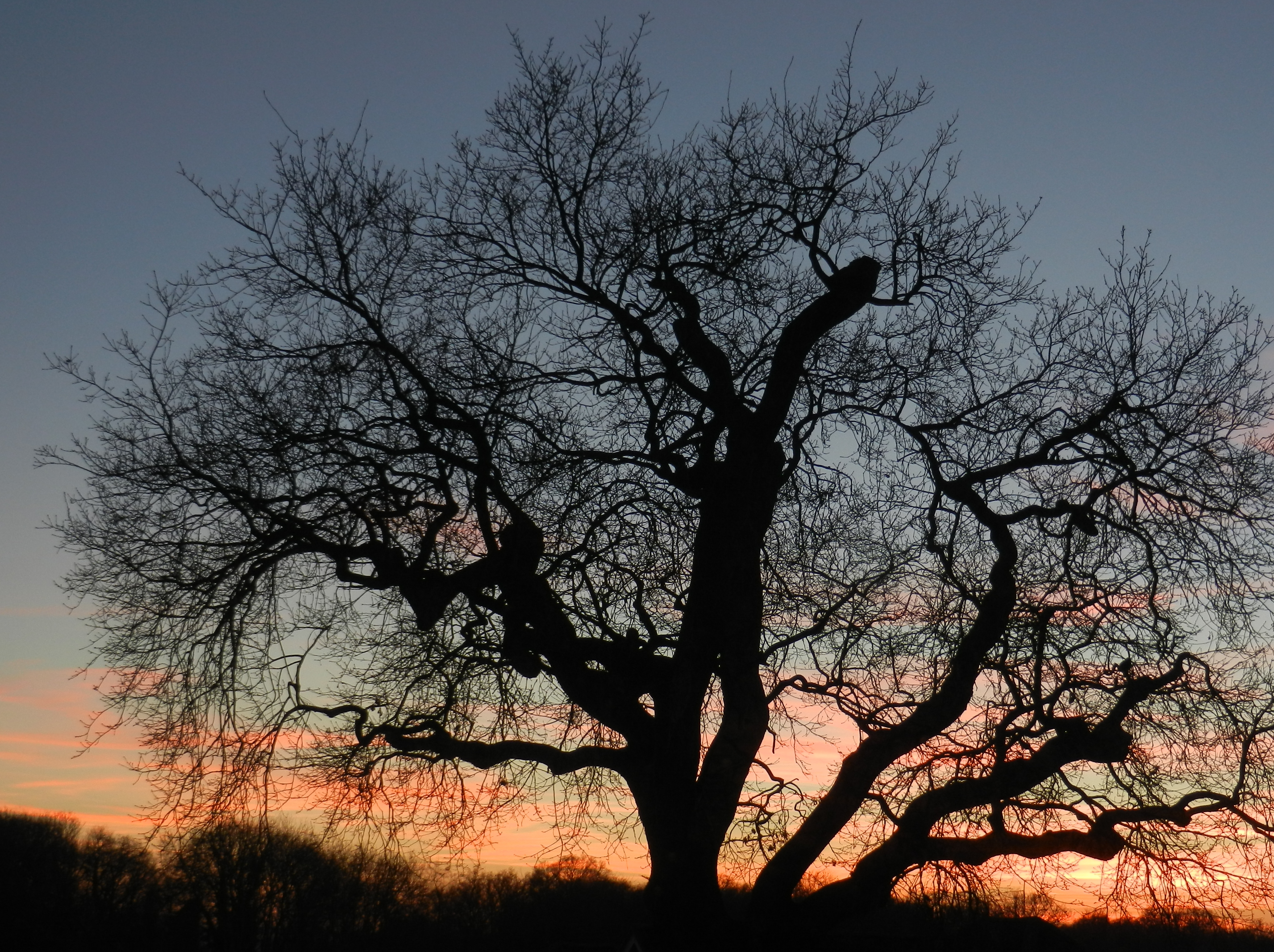 Photo of a tree in silhouette against a winter sky