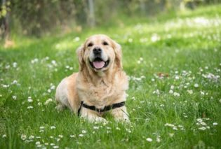 Photo of a dog in a grassy field